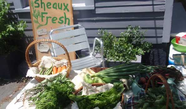 Sheaux Fresh Sustainable Food | InthekNOwla.com | New Orleans, Louisiana
